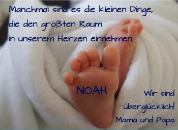 Anzeige Noah